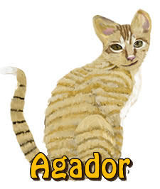 Agador | Agador and Mila's Jungle Adventure | Children's Picture Book  | Amazon & Amazon Kindle